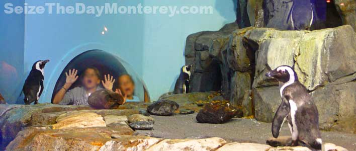 The Penguin Exhibit at the Monterey Aquarium is favorite among kids!
