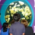 Visit the Monterey Aquarium on Spring Break