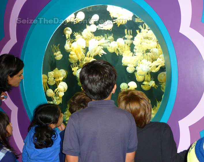 Visit the Monterey Aquarium on Spring Break