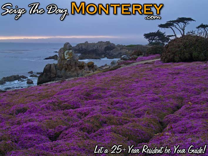 Purple Carpet Pacific Grove just before the Sunrise